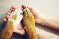 心臓の機能障害を起こす「犬フィラリア症」